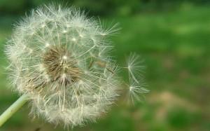 Természetes gyógymódok az allergia ellen