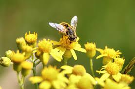 A pollenallergia gyakran előfordul