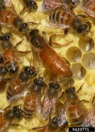 Minősített méhpempő az egészségünk megőrzéséért
