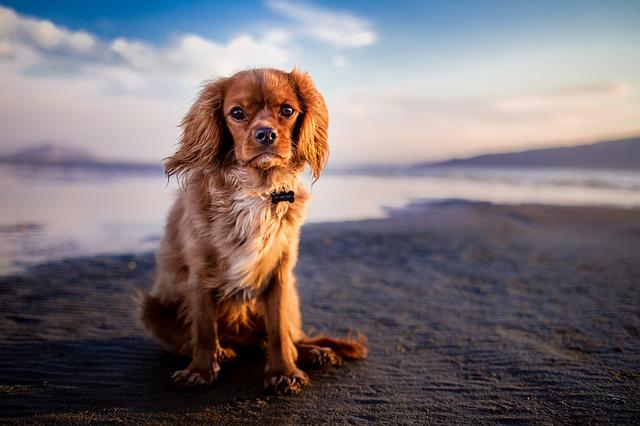 kutyaszőr allergia ellen
