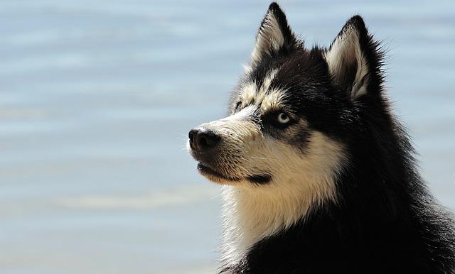A kutyaszőr allergia körültekintéssel elkerülhető
