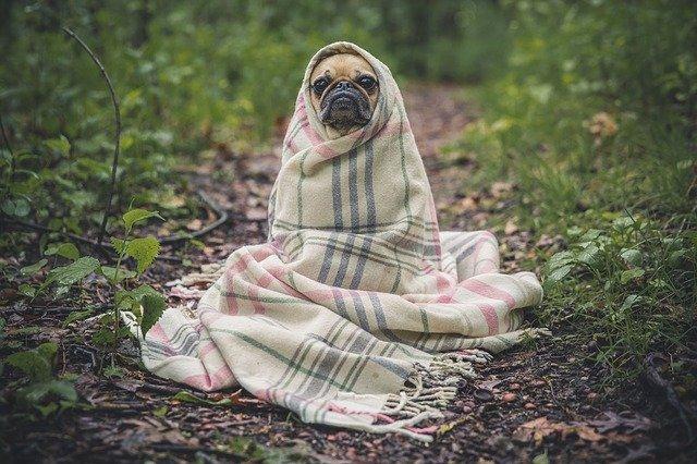 A kutya allergia a kendvenceinket is kínozza