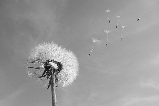 pollen allergia gyógyszer