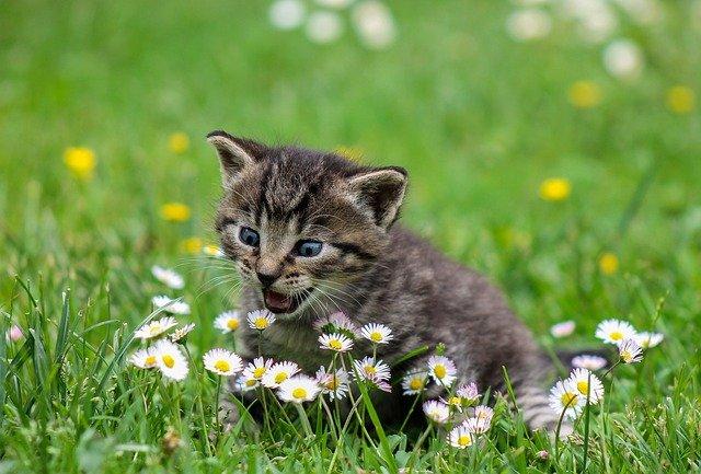 macska allergia tünetei