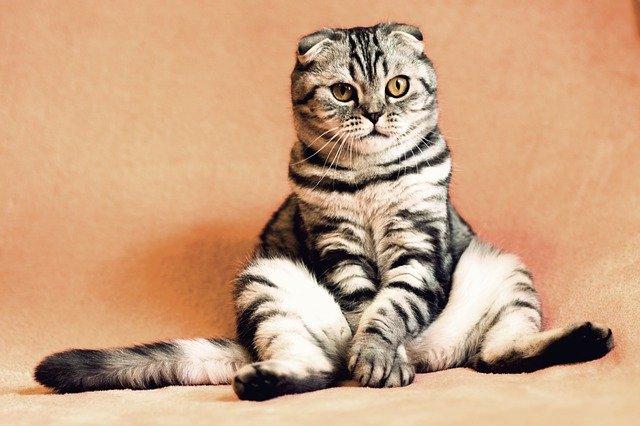 A macska allergia és annak viszontagságai