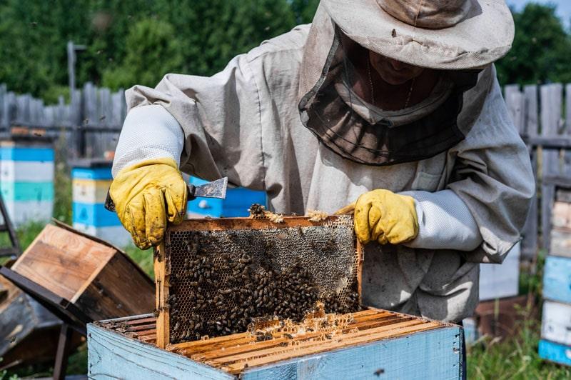 méhcsípés ellen