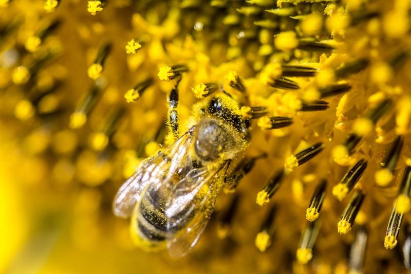 méhcsípés kezelése